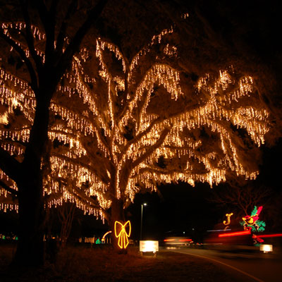where to see christmas lights in charleston